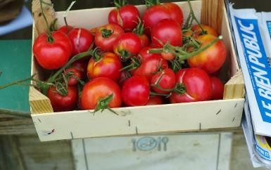 Tomatoes in Paris