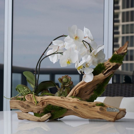 Orchid Plant on Driftwood by Emilio Robba