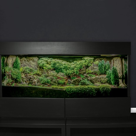 Miniature Indoor Watergarden by Plantaria