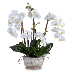Phalaenopsis Orchid by New Growth Designs