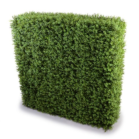 Boxwood hedge by New Growth Designs