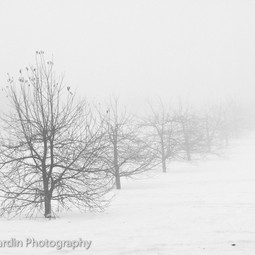 Fog and Snow by Valerie Jardin Photography