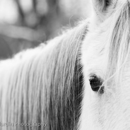 White Horse by Valerie Jardin Photography