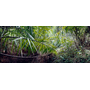 Rain forest by wallunica - your tailored wallpaper