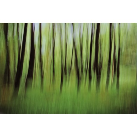 Abstract forest by wallunica - your tailored wallpaper
