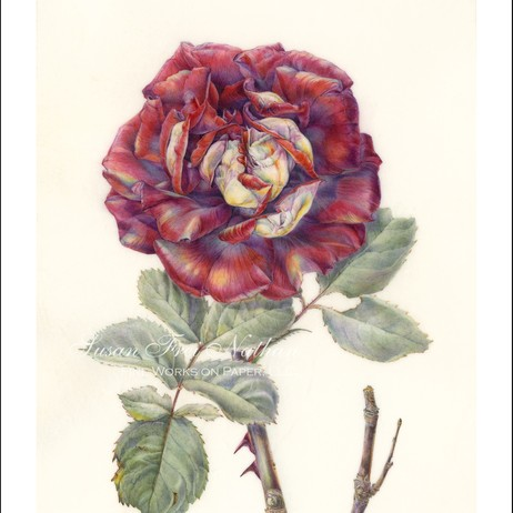 red rose by jean emmons by Susan Frei Nathan Fine Works on Paper