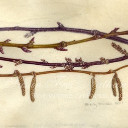 winter branches from my garden by beverly duncan by Susan Frei Nathan Fine Works on Paper