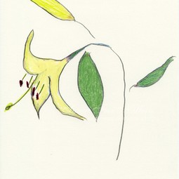 lily iii by elizabeth enders by Susan Frei Nathan Fine Works on Paper