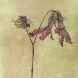 dried flower by lara call gastinger by Susan Frei Nathan Fine Works on Paper