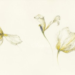 three white tulips by kate nessler by Susan Frei Nathan Fine Works on Paper