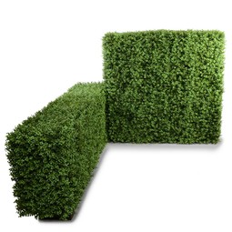 "61"" Boxwood Hedge by New Growth Designs"