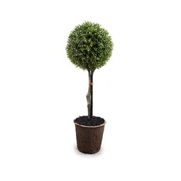 UV Stable Boxwood Topiary by New Growth Designs