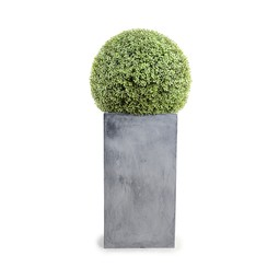 "15"" Boxwood Ball On Column by New Growth Designs"