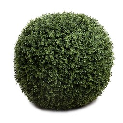 "28"" Boxwood Ball by New Growth Designs"