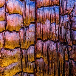 Burnt Tree Bark by Alexander Kunz by PrintedArt